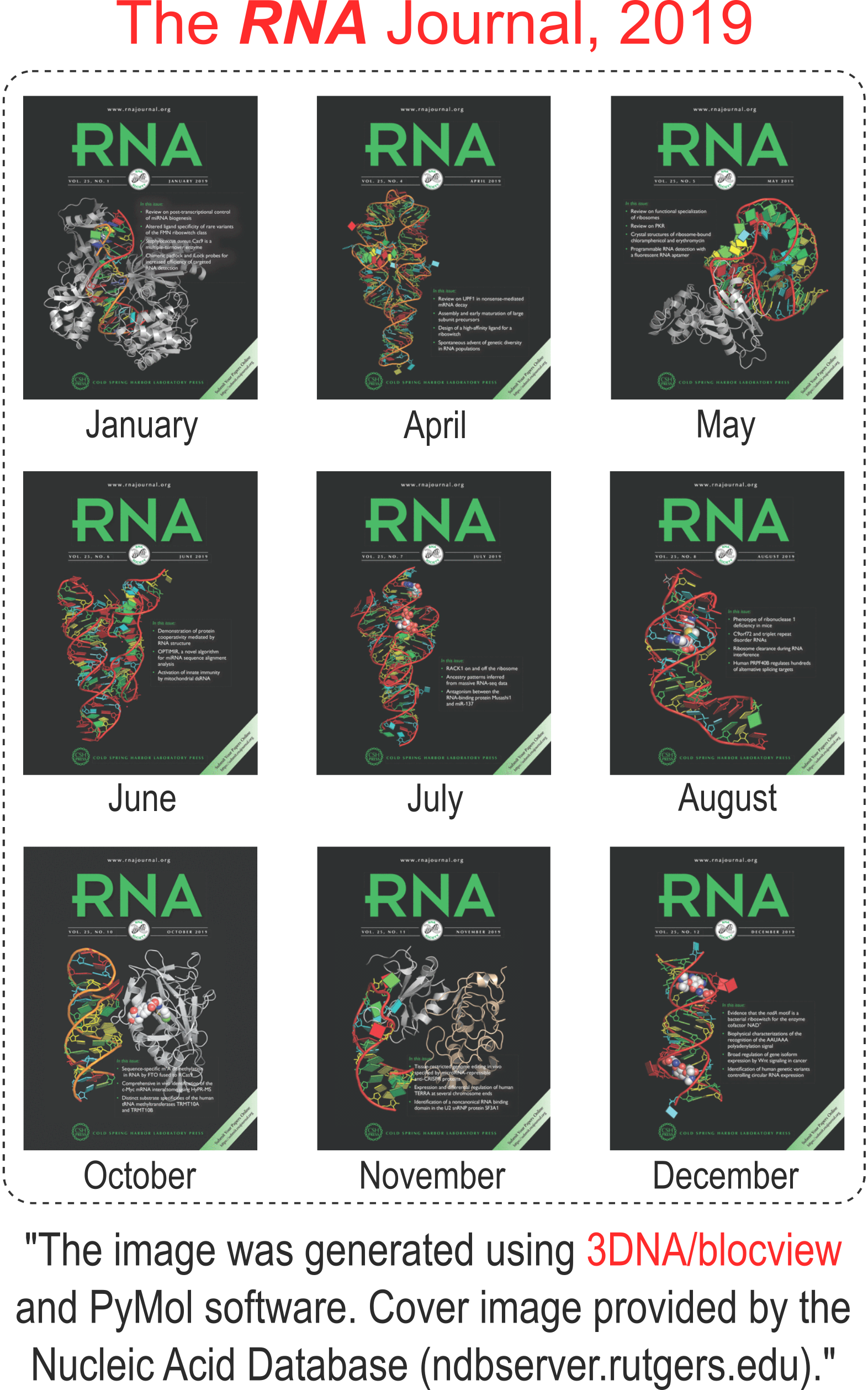 3DNA/blockview-PyMOL cartoon-block schematics in the covers of the RNA journal in 2019