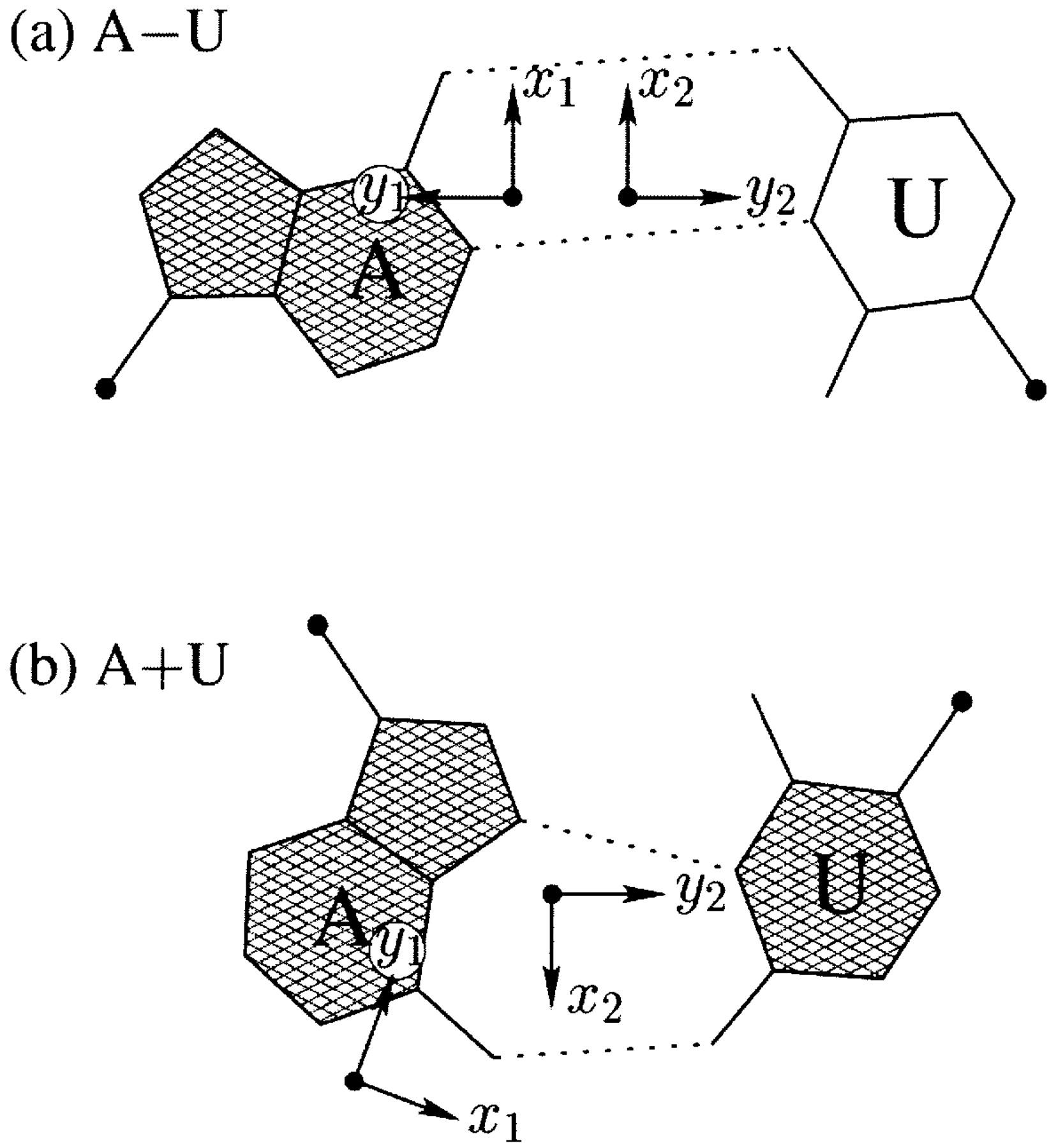 Watson-Crick vs Hoogsteen base pairs