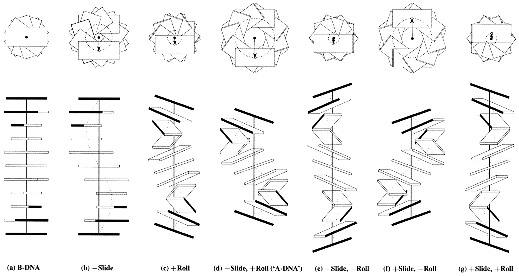 Influence of Slide and Roll on DNA helical conformation