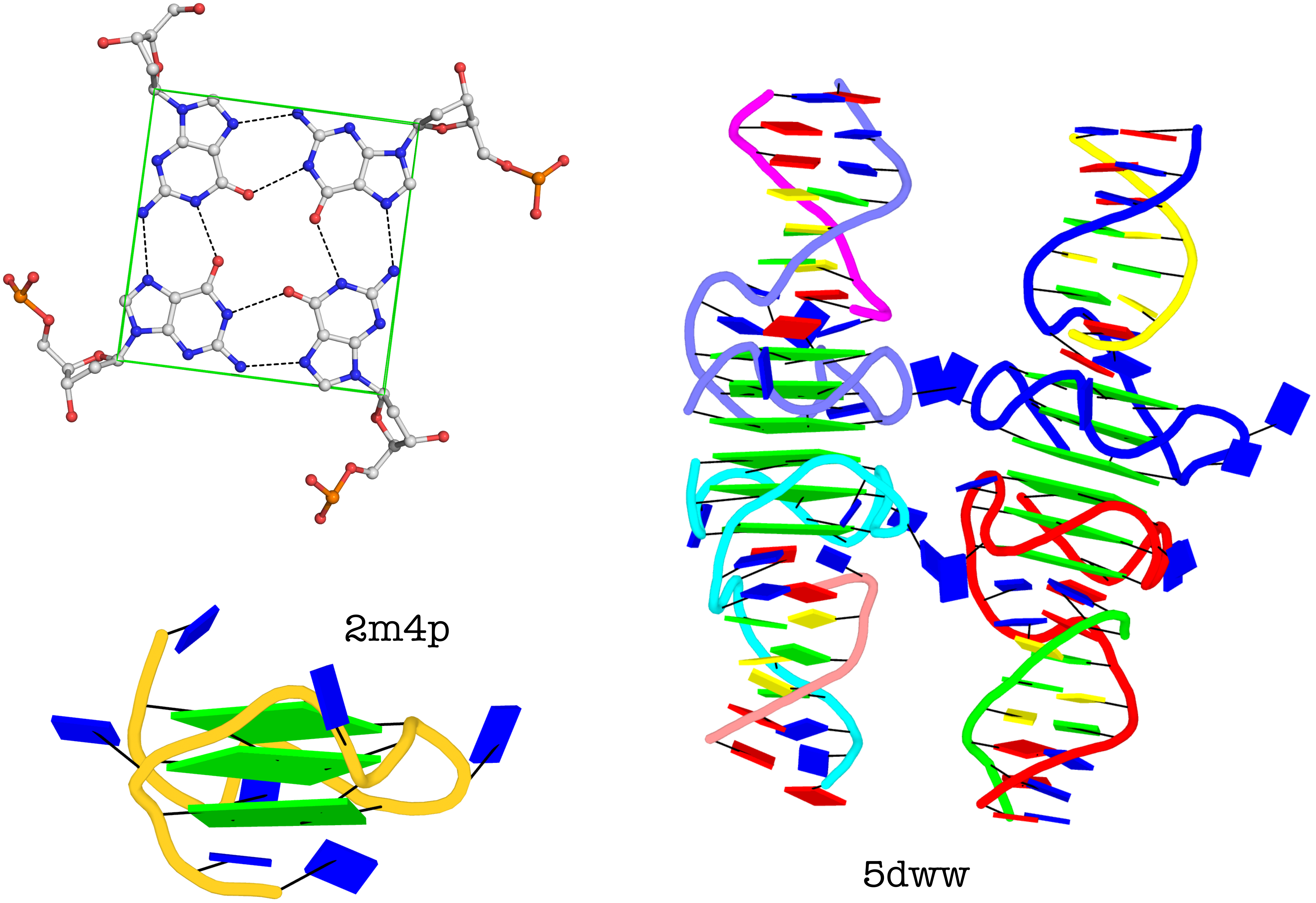 Representative G4 structures